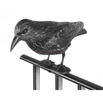 Krkavec odstrašující ptáky